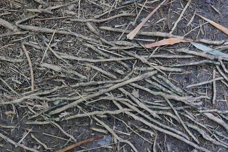 raíz de planta: root of tree plant background