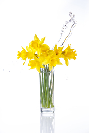 jonquil: tied narcissus isolated on white background, summer flowers in glass with splashes of water, with reflection