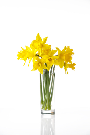 jonquil: tied narcissus isolated on white background, summer flowers in glass, with reflection Stock Photo