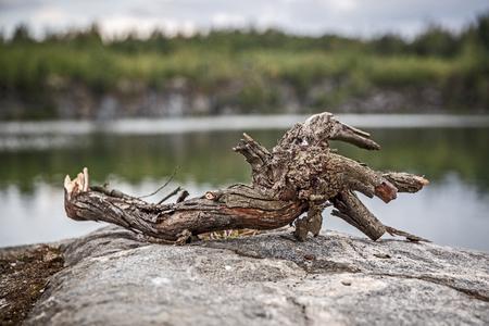 Snag on the nature lake on stone