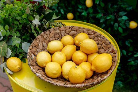 Lemons in a basket, green floral background Stockfoto