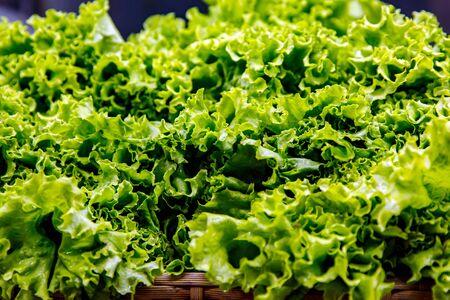 Vegetables in supermarket. Close-up shot of lettuce leaf Stock fotó