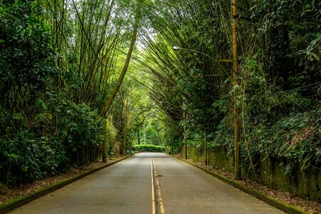 Bamboo trees overhang the road