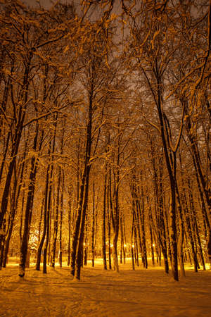 Winter in the night park. Trunks of trees in the light of lanterns