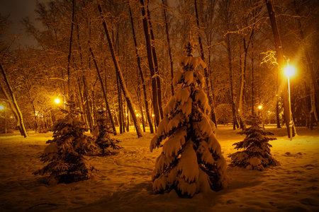 Winter in the night park. Cfur tree in the light of lanterns