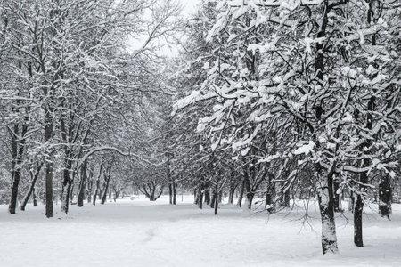 Winter in the park. Winter city landscape.
