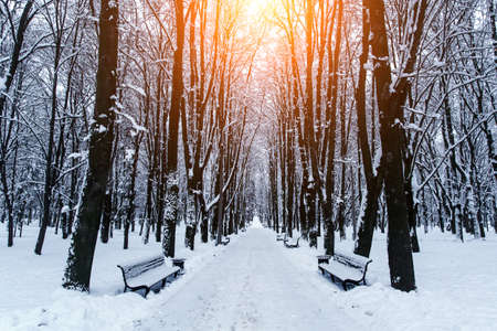 Winter alley in the city park. Snow-covered benches on the sides Standard-Bild