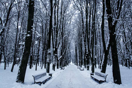Snow-covered bench in the city park. Winter landscape