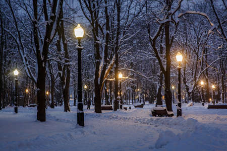 Winter park in the evening covered with snow with a included street lamps
