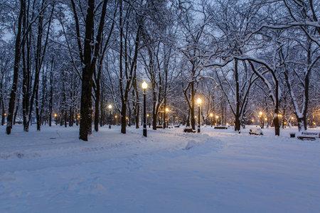 Snowy city park on a winter night.