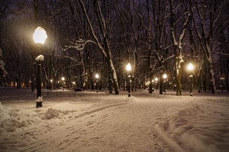 Snow blizzard on the street. The lantern illuminates the snowy branches