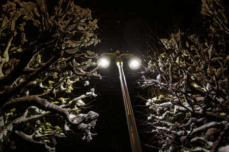 Modern street lamp in winter. Snow in the trees around Standard-Bild