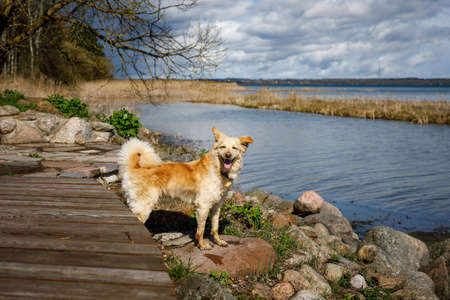 The lonely dog is waiting for his owner by the lake