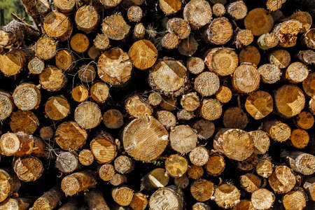 tree stump background, logs in wood textute