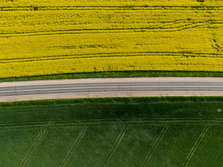 Aerial view of the rape field during flowering and the road between the fields