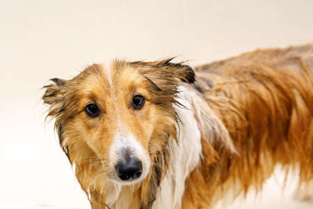 The dog grooming. Washing your pet.