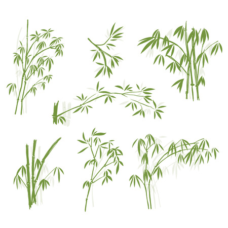 Bamboo, Isolated on white background, high resolution