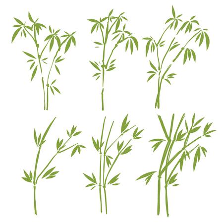 Bambus, isoliert auf weißem Hintergrund, hohe Auflösung Standard-Bild - 65182584