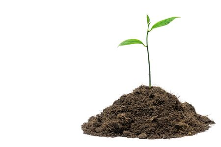 Young green plant on the pile of soil in white backgground.