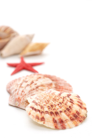 narrow depth of field: A group of sea shells on white background, narrow depth of field Stock Photo