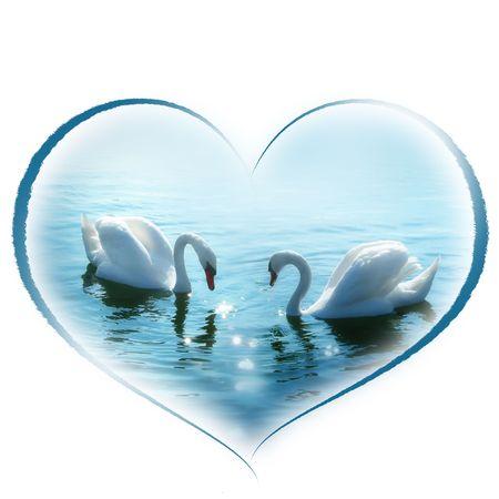 cisnes joven en forma de corazón. El amor, la invitación de boda Foto de archivo - 554137