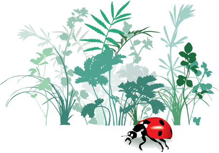Variety of Field herbs and plants, ladybird. Traced, vector illustration, Isolated