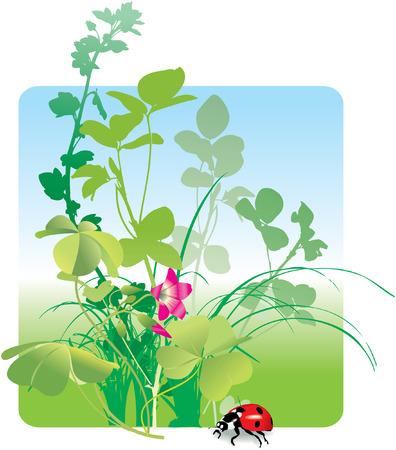 Variety of field herbs, plants, grass and ladybird. Vector illustration Illustration