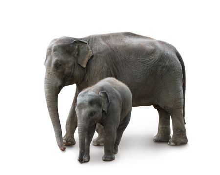 Elephants - mother and baby, isolated with shadow