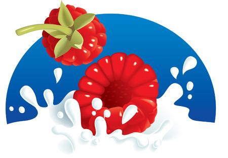 nutriments: Frambuesas chapoteando en leche o yogur. Ilustraci�n vectorial. Lo mismo con fresas en cartera.