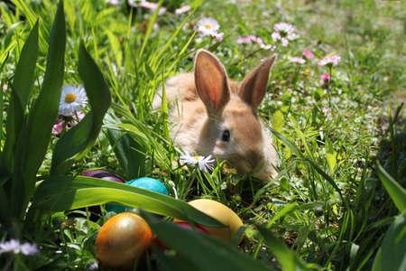 osterhase: Osterhase versteckt Eier im Garten