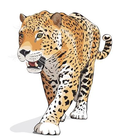 animales de la selva: Panther gato salvaje. Ilustración vectorial
