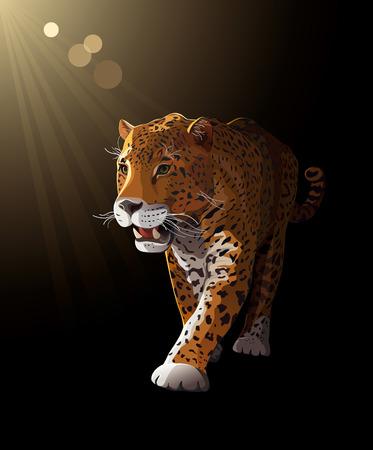 panthera: Jaguar, Panther gatto selvatico, di notte, al chiaro di luna illustrazione vettoriale