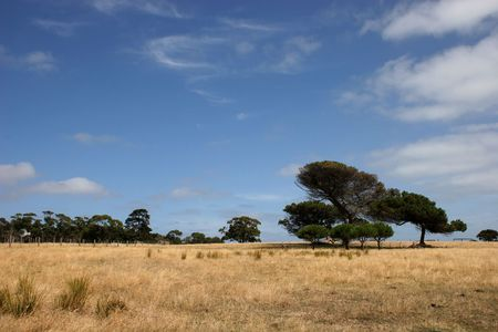 Alone tree (blue sky and yellow field)