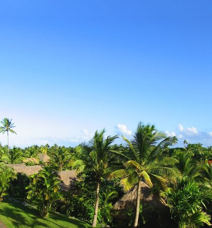 Fijian view. Green palms agains the blue sky. Stock Photo