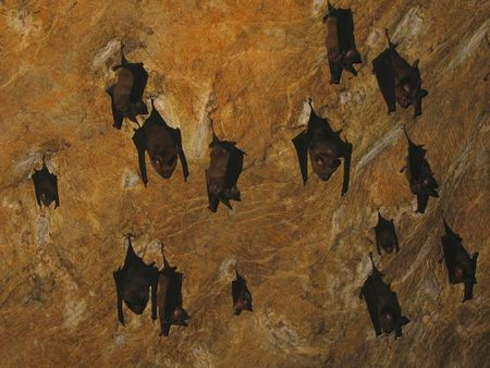 Cave ceiling with bats (Malaysia) Stock Photo