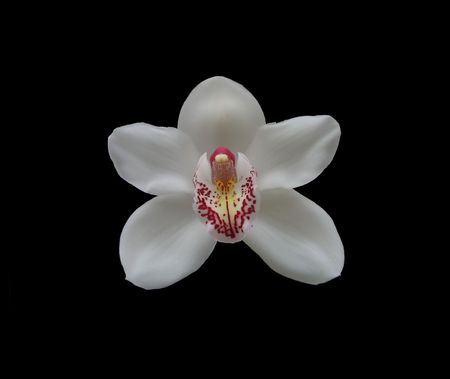 Photo of the white orchid (isolated on black) Stock Photo
