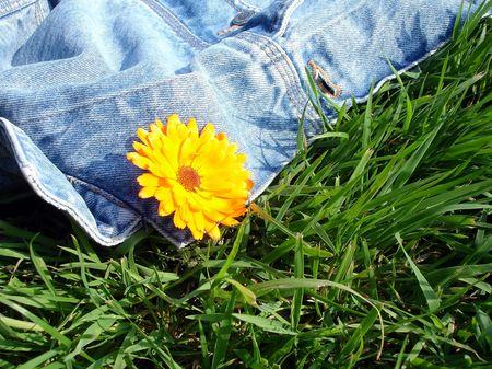 dasiy: Summer flower