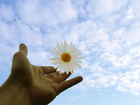 Accept my friendship , sky, hand, daisy, Camomile ,concept photo