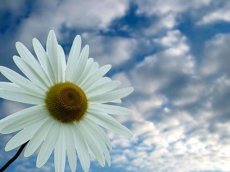 Accept my friendship , summer, sky, daisy, Camomile ,concept Stock Photo - 421693