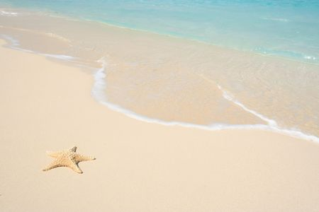 sandy beach: A starfish besides sea shore on a beach with white sand and blue water.