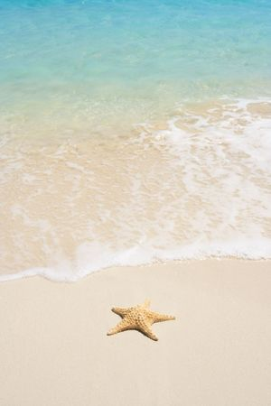 A starfish besides sea shore on a beach with white sand and blue water. Stock Photo - 3121981