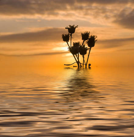 Dry flowers on a background of sunrise and the fiery sky. Pond in the foreground