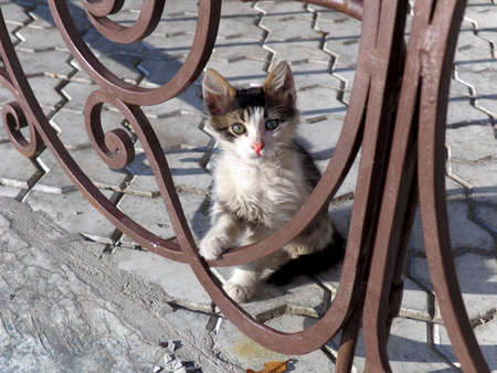 pearly gates: Small kitten in a court yard behind a metal fencing