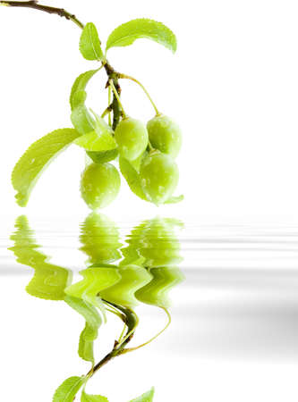 useful: Branch green plums with leafs and drops of water. Reflection in a reservoir