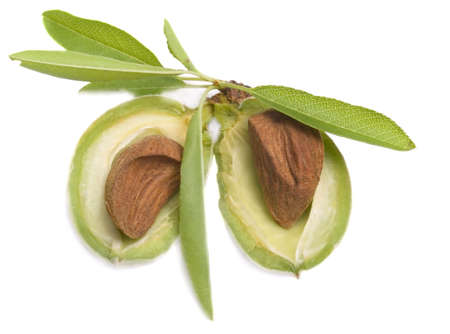 Opening young almonds with nucleus it is isolated on a white background