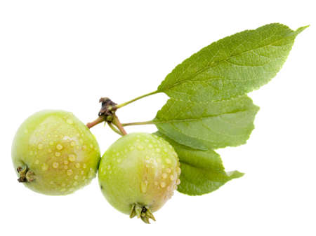 Small wild apples with drops of water on a white background it is isolated Stock Photo