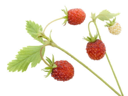Wild strawberry on a white background it is isolated photo