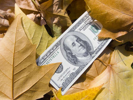 The American dollars in yellow autumn maple leaves