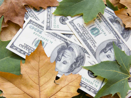 The American dollars in autumn maple leaves photo