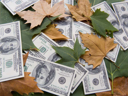 The American dollars in autumn maple leaves